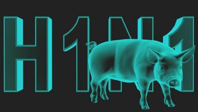 معلومات هامه عن انفلونزا الخنازير المرض المقلق عالميا