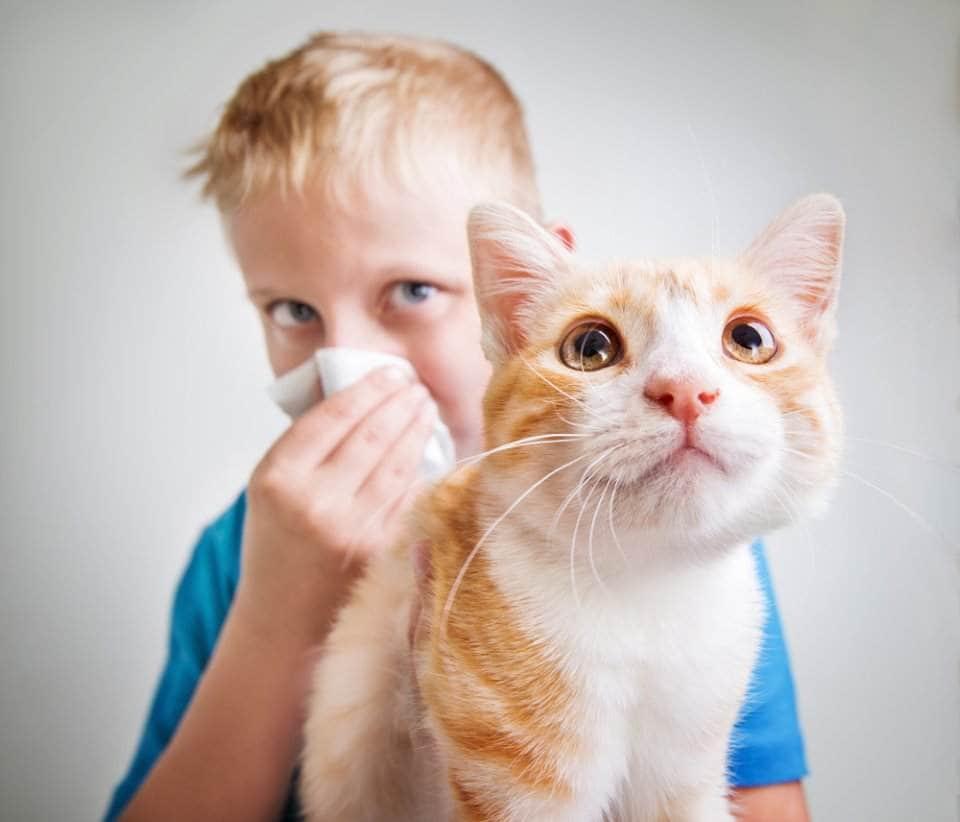 تعرف علي تفاصيل حساسية الحيوانات الاليفة وكيفية علاجها وطرق الوقاية منها