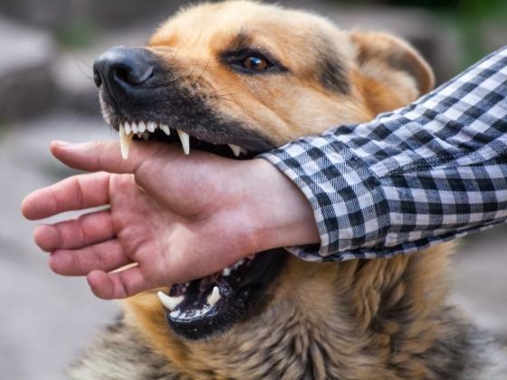 تعرف علي كيفية التعامل مع عضات الحيوانات والاسعافات الاولية لتجنب الاصابة بالعدوي