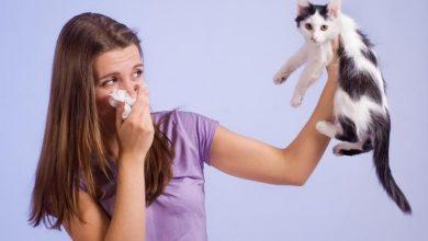 اعراض حساسيه الحيوانات الاليفه افضل الادويه المعالجه